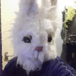 Spike McClarrity - white rabbit